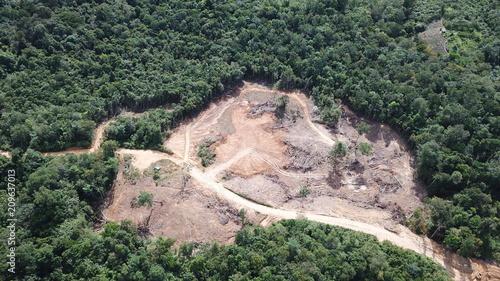 Poster Kaki Deforestation of Borneo rainforest