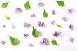 beautiful pattern of flowers and leaves lilac on white background. top view, flat lay