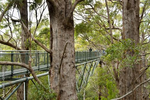 Valokuva  Tree Top Walk - Walpole - Australia