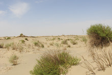 Taklamakan Desert, Scanty Vegetation, China
