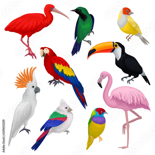 Detailed vector set of various exotic birds. Wild creatures with colorful feathers. Fauna and wildlife theme