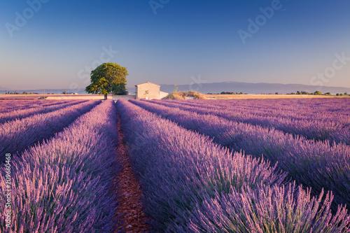 Garden Poster Lavender Campi di Lavanda in Provenza, Francia