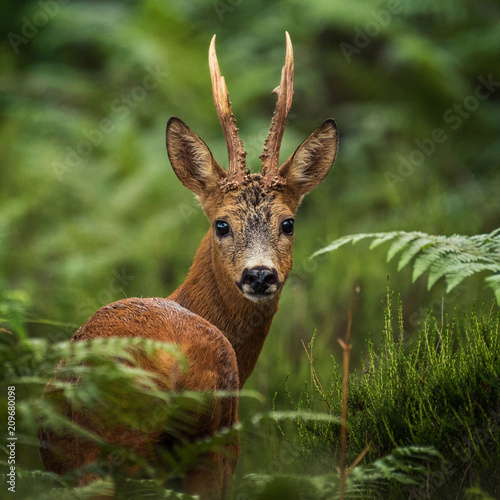 Staande foto Hert portrait of deer in the woods