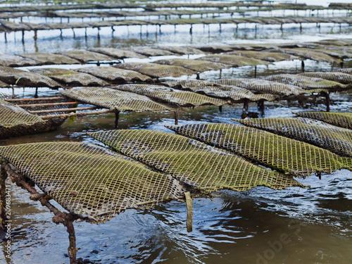 Fotografija Oyster Farm