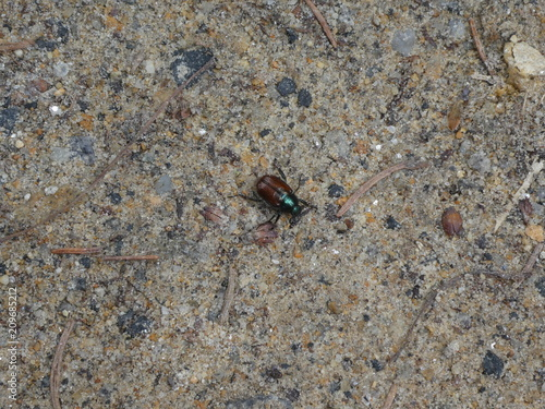 Foto  small bug green brown