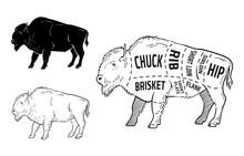 Cut Of Bison Set. Poster Butch...