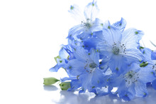 Flowers Of Delphinium On A Whi...
