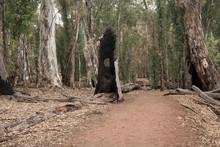 Wilpena Pound South Australia,...