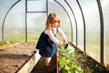 Adorable Girl Watering Seedlings In The Greenhouse.