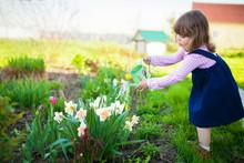 Little Girl Watering Daffodils...