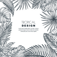Tropical Palm Leaves Vector Sq...