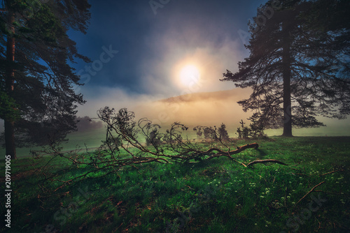 Photo  Forest landscape and morning fog in spring