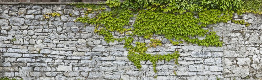 Fototapeta Rustikale Natursteinmauer mit Weinlaub