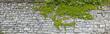 canvas print picture - Rustikale Natursteinmauer mit Weinlaub