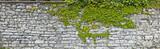 Fototapeta Kamienie - Rustikale Natursteinmauer mit Weinlaub
