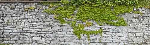 Rustikale Natursteinmauer mit Weinlaub