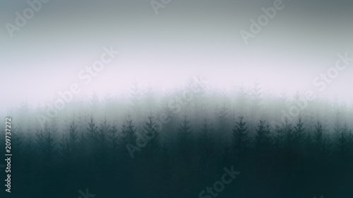 Fotografie, Obraz  nature background with moody forest