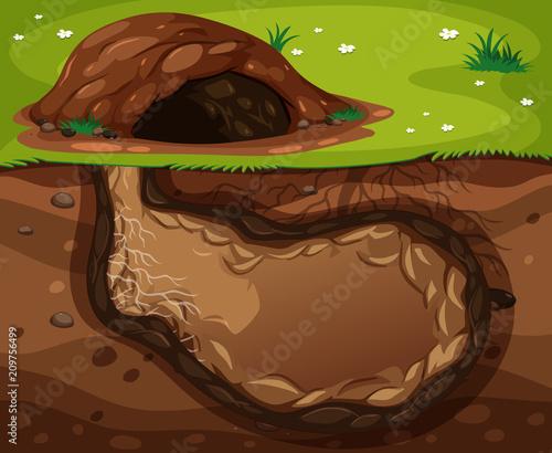 An Animal Underground Habitat on White Background Poster Mural XXL