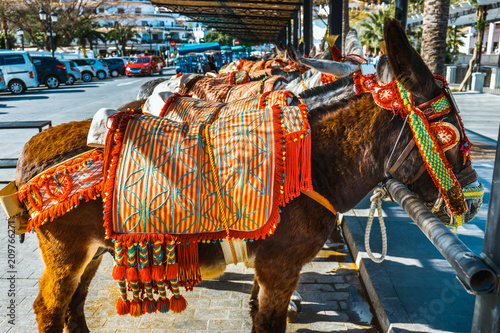 Close up of colorful decorated donkeys famous as Burro-taxi waiting for passengers in Mijas, a major tourist attraction Wallpaper Mural