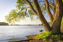 Scenic Tree On Shore Of Lake A...