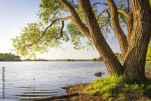 Spoed Foto op Canvas Bomen Scenic tree on shore of lake at warm summer evening. Landscape of river bank with tree trunk and clear sky. Beautiful natural nature. Under tree on lake shore.