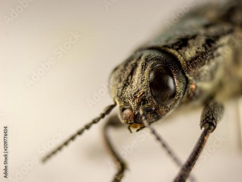 Tuinposter Macrofotografie Macro photography of a beetle