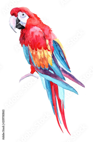 papuga-na-bialym-tle-akwarela