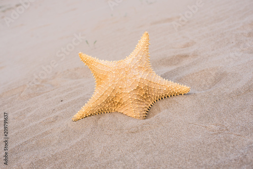 Starfish and shells on the sand of a beach