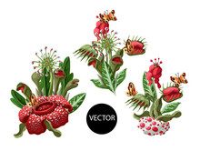 Plant Predators Such As Venus Flycatcher, Sundew And Others. Unique Flowers Botanical Illustration.