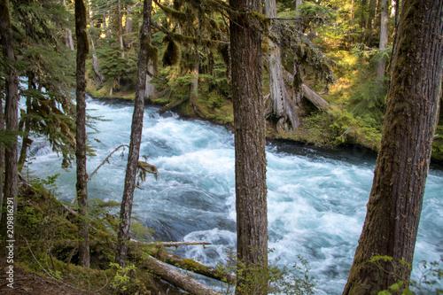 Fotografie, Obraz  Oregon Waterfall