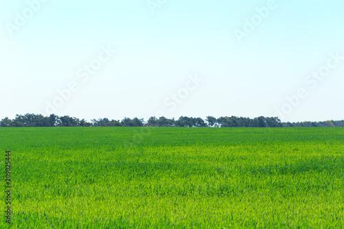 Fotobehang Wit beautiful Green field