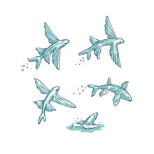 Vector Set Flying Fish Jumping...