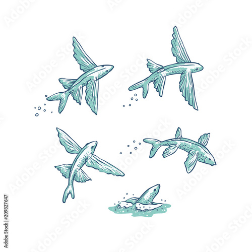 Vector set flying fish jumping dive and swim Canvas Print