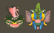 Hand Drawn Vector Abstract Cartoon Summer Time Graphic Decoration Illustrations Sign Collection Set With Exotic Tropical Rainforest Pink Flamingo And Parrot Macaw Birds Isolated On Black Background