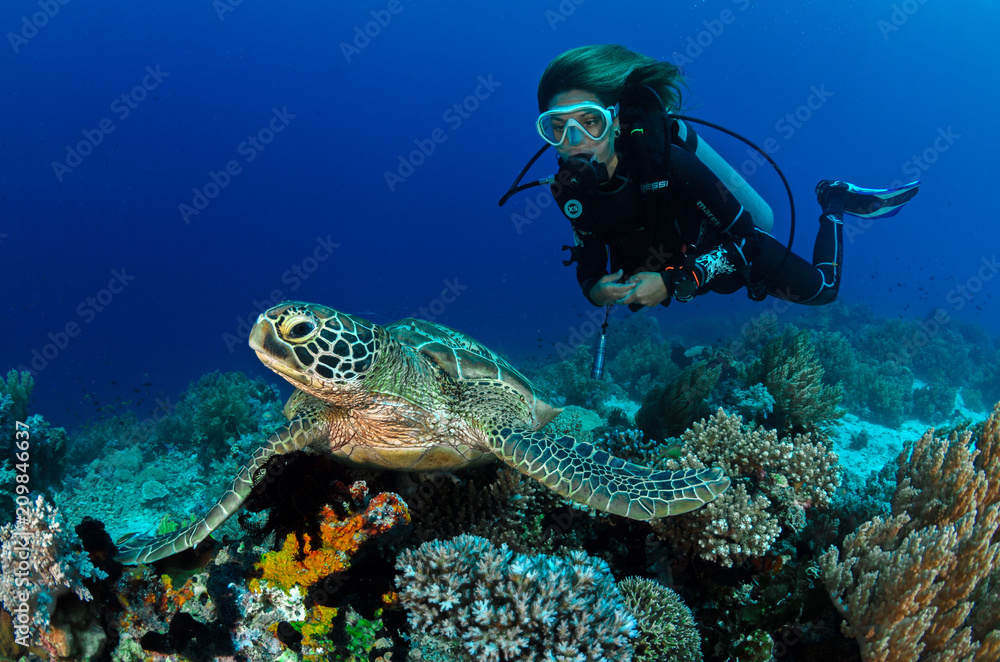 Fototapeta Turtle and girl