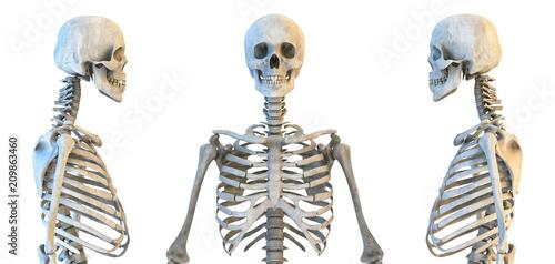 Human skull and rib cage skeleton anatomy set Canvas Print