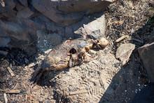 Dead Seal On The White Sea Shore