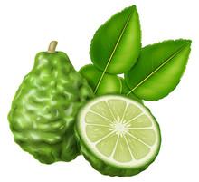 Kaffir Lime Or Makrut Lime. Ve...