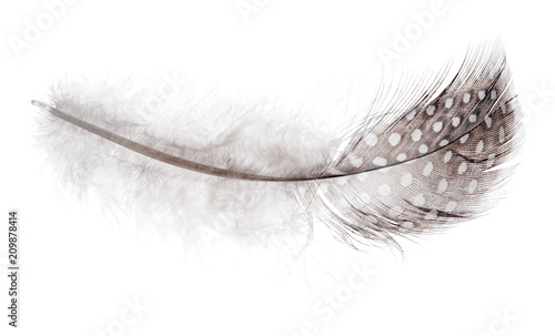 fluffy feather in light spots on white