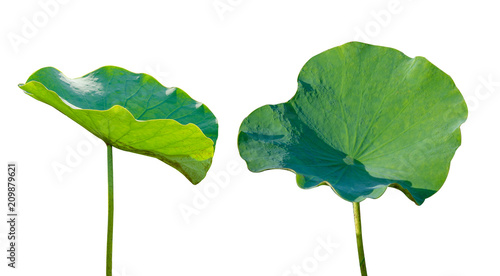 Photo Stands Water lilies Lotus leaf Isolate 2 collection of white background