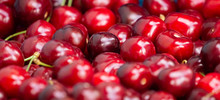 Close Up Of Pile Of Ripe Cherries With Stalks. Large Collection Of Fresh Red Cherries. Ripe Cherries Background