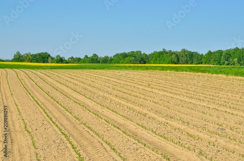 Foto op Aluminium Blauw Springtime rural landscape. Cultivated fields with green trees and rapeseed in the background.