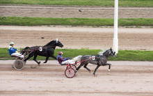 Horse Racing, Horse Racing, Horses, Jockey, Horseman, Hippodrome,bets, Reins, Harness,