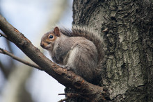 A Squirrel Crouching On A Tree Branch Looking Cute