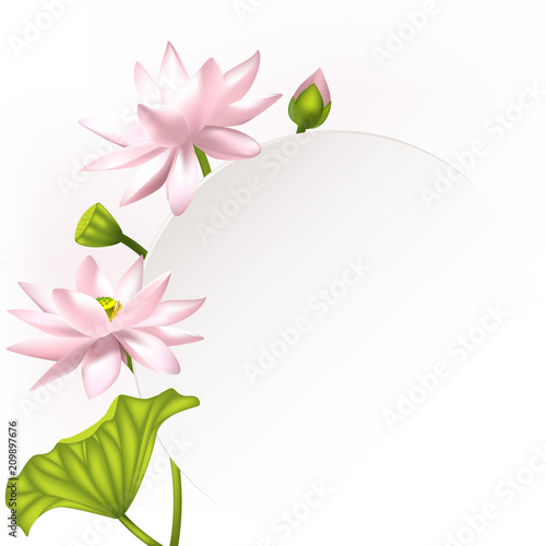 Lotus Flowers Floral Background Water Lily Buds Purple Petals