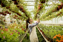 Young Woman Working With Spring Flowers In The Greenhouse