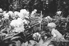 George In Garden Black And White