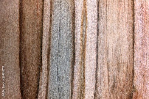 Photo Textured Background of Dark and Light Striped Ambrosia Maple Wood