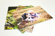 canvas print picture - Stack of Styrene Mounted Family Portrait Prints on White Background