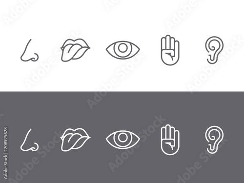 Set of symbols of the five senses Fototapete